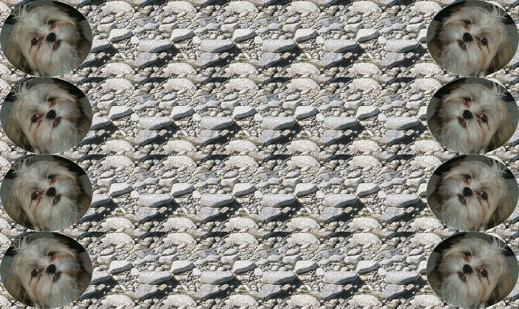 fond-coquin-1680-1000.jpg