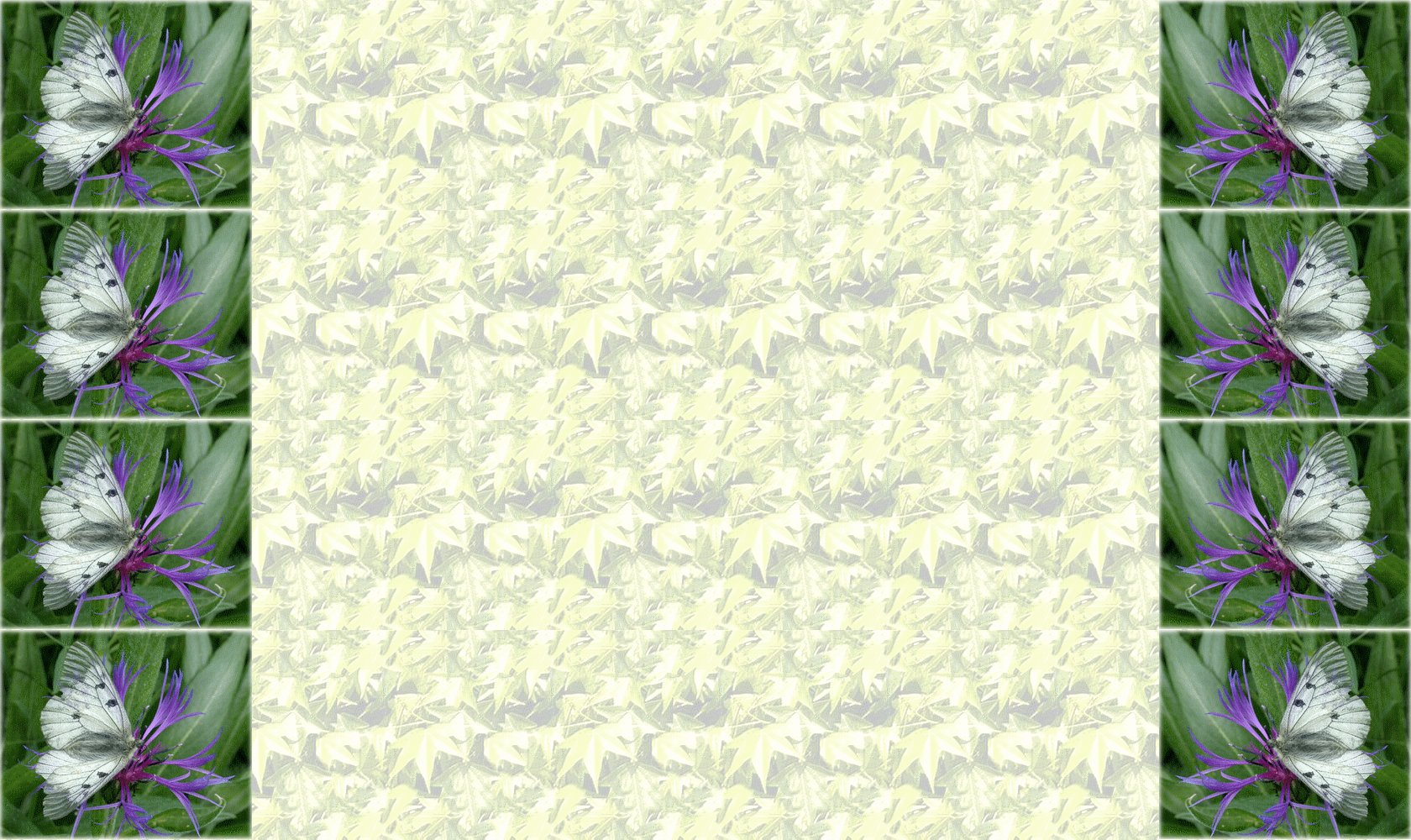 fond-feuille-1680-1000.jpg